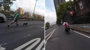 Hund rennt auf die Autobahn los – und fremde New Yorker setzten sich ein