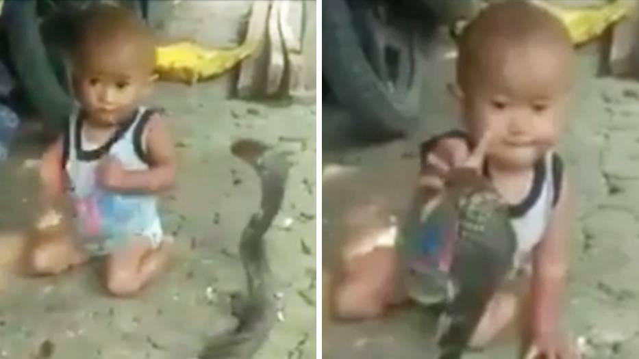 Gefährlicher Spielgefährte: Kleiner Junge spielt mit Kobra – bei diesem Video stockt Ihnen der Atem