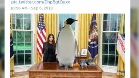 Satire: Trump oder Pinguin? Für Twitternutzer ergibt beides Sinn