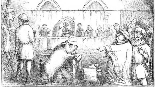 Meist wurden Schweine wegen Mord angeklagt.