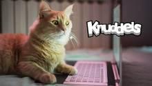 Knuddels.de wurde von Hackern angegriffen