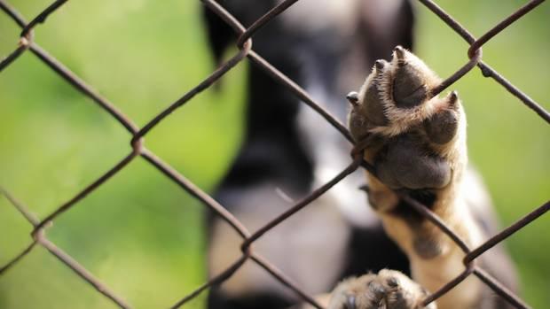 Benji, der traurigste Hund Kaliforniens, hat ein neues Zuhause