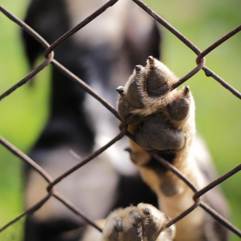 Hunde, die vor und nach dem Abnehmen von der Straße gerettet wurden
