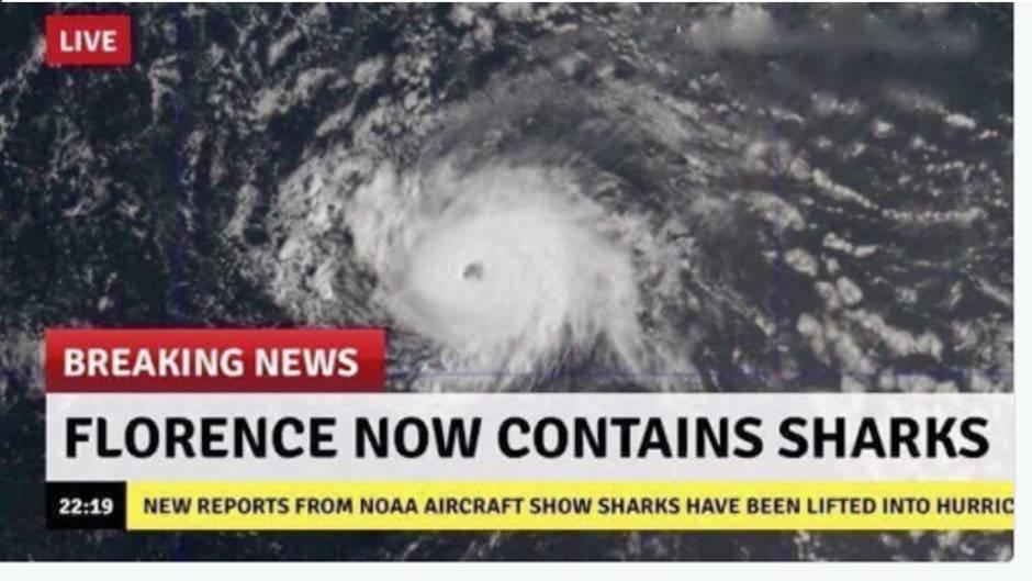 Fake in Sozialen Netzwerken: Haie im Sturm? Twitternutzer scherzen über Florence
