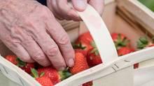 Korb mit Erdbeeren