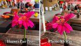 Bei Tageslicht sind die Unterschiede weniger auffällig. Beide Kameras machen ein hervorragendes Foto mitvielen Details und einer ansehnlichen Hintergrundunschärfe (Bokeh). Die Kontraste des Huaweis-Fotoswurden von der KI allerdings ordentlich hochgedreht.