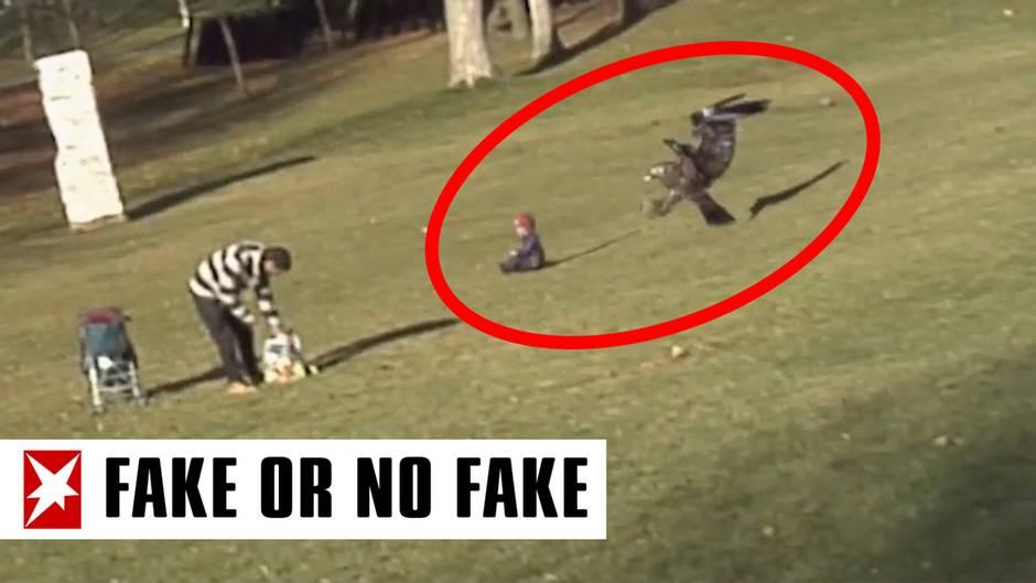 """""""Fake or No Fake"""": Steinadler reißt Kleinkind in die Luft? Wie Fehler Fakevideos entlarven"""