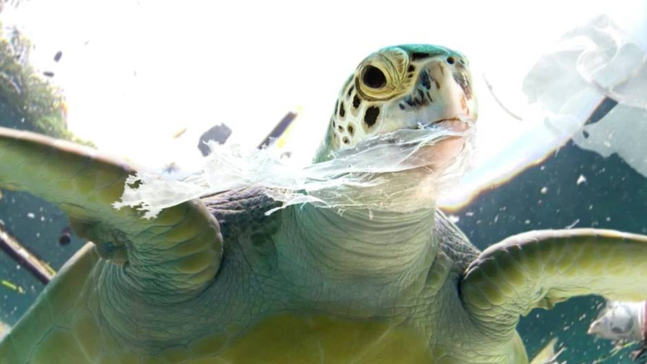 Neue Studie: So gefährlich ist Plastik für Meeresschildkröten