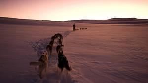 Ein Schlittenhundegespann in der aufgehenden Sonne der Polarnacht