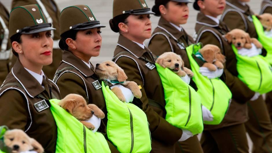 Santiago, Chile: Polizistinnen marschieren mit Polizeihundewelpen bei der Parade zur Unabhängigkeitsfeierdes Landes