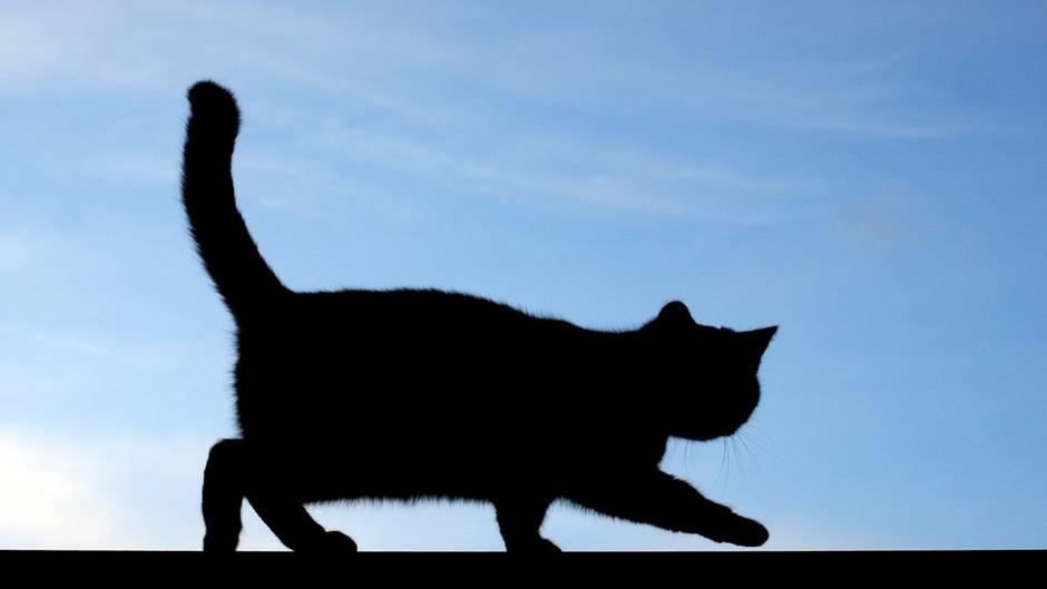 Kein Cat-Killer in Großbritannien