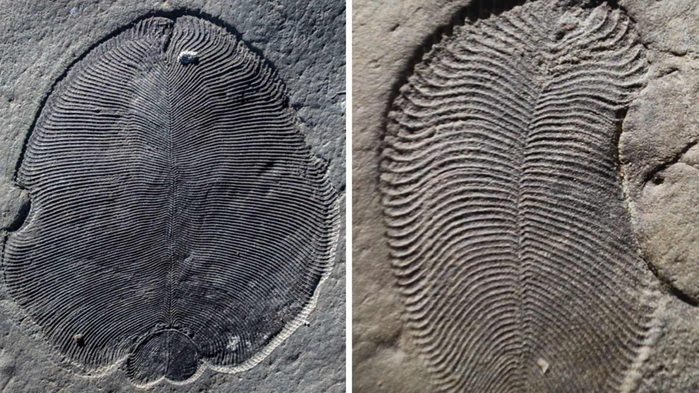älteste Tiere Der Welt