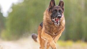 Ein Hund greift an