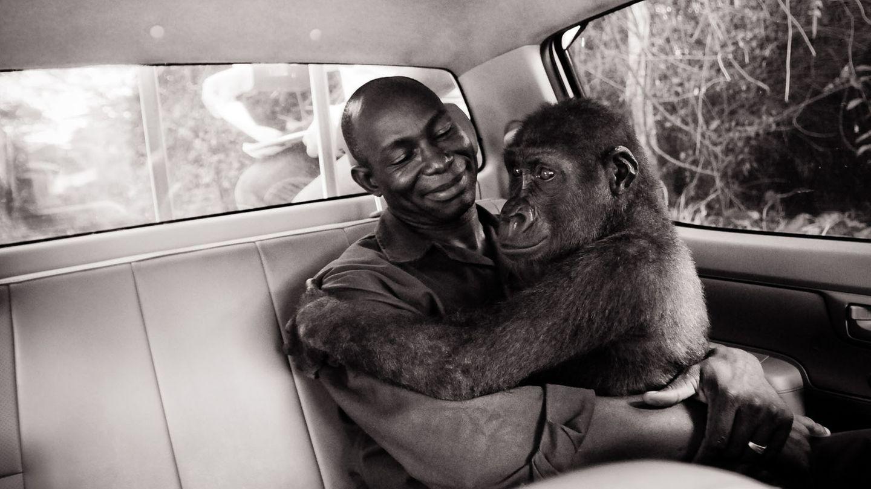 Das beste Einzelfoto: die Rettung eines Gorilla-Waisenkindes in Kamerun