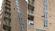 Waschbär erklimmt Wohnkomplex, springt und überlebt Sturz