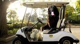 Vierbeiner auf Reisen: Wenn Bello das Steuer übernimmt: Elf tolle Bilder von Hunden in Autos