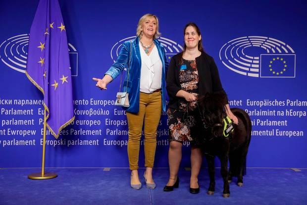 Die belgische Europa-Abgeordnete Hilde Vautmans (l.) Autorin Monique Van den Abbeel und das Blindenpferd Dinky