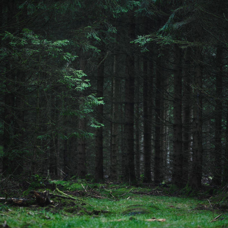 Wald nackt geschichte im Nackt im
