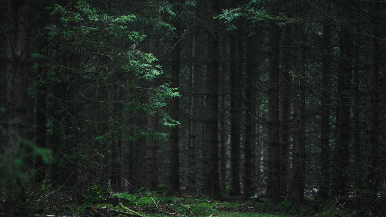Wald nackt privat im Nackt im