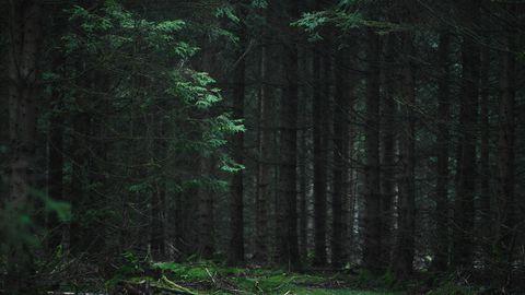 Nachrichten aus Deutschland: Ein Wald bei Nacht