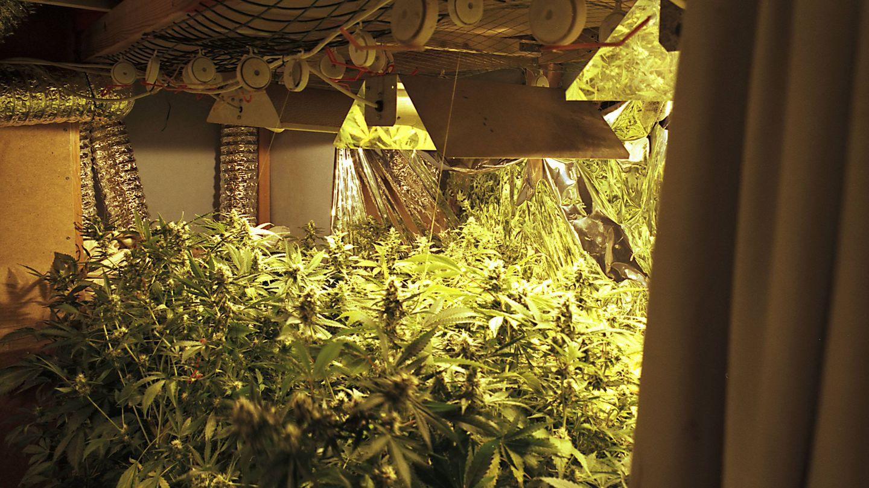 nachrichten deutschland - marihuanaplantage