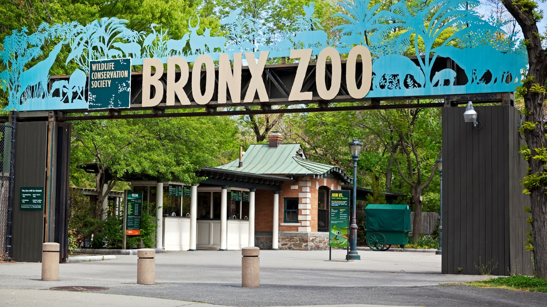 """Bronx Zoo  Mit 4000 Tieren gehört der Bronx Zoo, der 1899 eröffnet wurde, zu den größten der Welt. Die Gehege sind nach Kontinenten und ihrer Tierwelt strukturiert. Außerdem gibt es ein Schmetterlingshaus. Mittwochs ist der Eintritt frei, """"donations"""" sind jedoch erwünscht.  Infos:https://bronxzoo.com"""