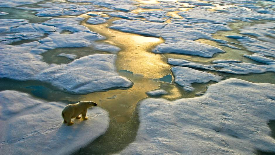 Ein Eisbär steht auf einer Eisscholle