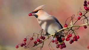 Ein Vogel sitzt im Baum und isst eine rote Beere