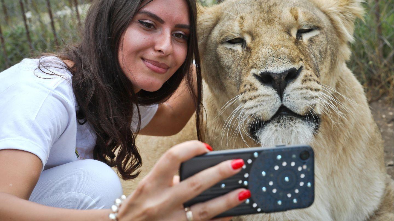Selfie mit Löwin