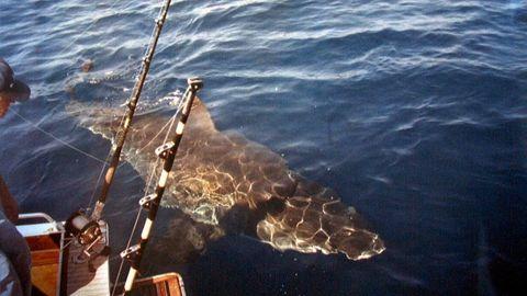 Great Barrier Reef: Hai vor Fischerboot (Symbolbild)
