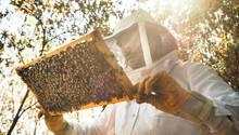 """Fabian hingegen ist begeistert von dem Getier:Er sagt Sätze wie """"Guck mal, guck mal, die machen crazy Zeugs!"""" oder """"Ich finde Bienen so spannend!"""", während er sie beobachtet."""