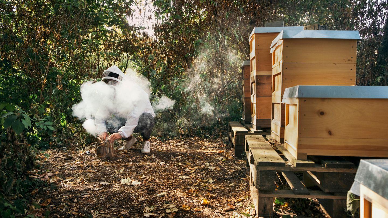 Sobald die Bienen Rauch riechen, denken sie, dass der Wald brennt. Dann saugen sie sich mit Honig voll und sind weniger stichfreudig. Ha, reingelegt!
