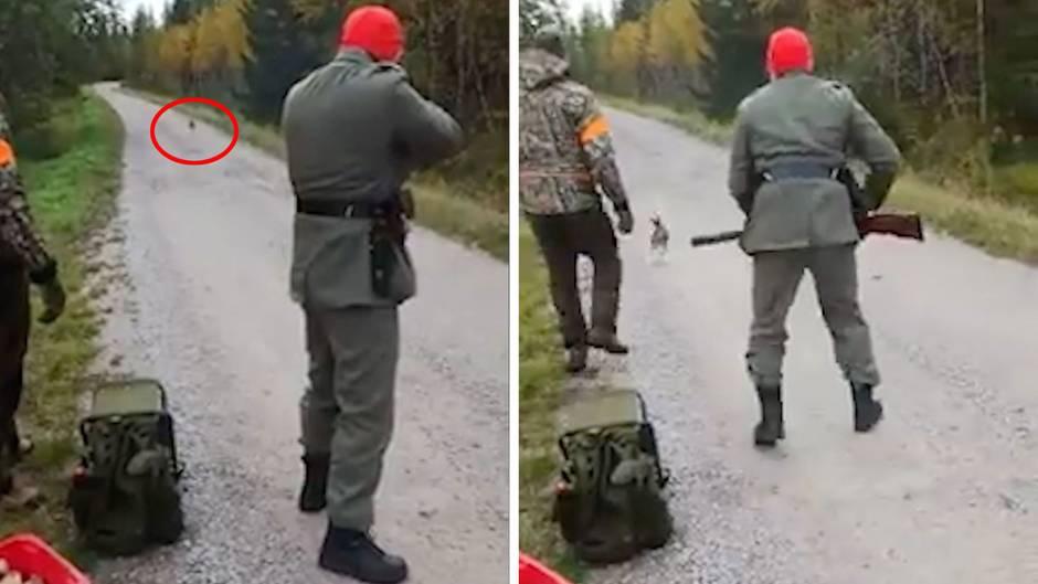 Virales Videos aus Finnland: Jäger nimmt Hasen ins Visier, doch das geht völlig schief
