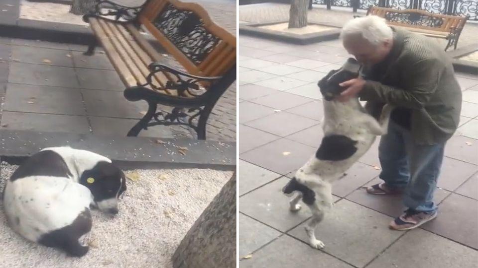 Mann findet seinen Hund nach drei Jahren