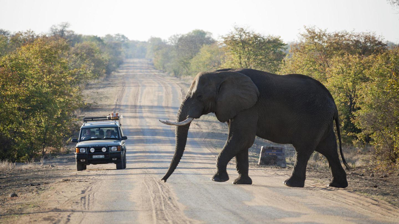 Kruger Nationalpark  Der Kruger Nationalpark ist das Aushängeschild Südafrikas. Er liegt im Nordosten des Landes und erstreckt sich über eine Fläche von fast 20.000 Quadratkilometern - das ist etwas mehr als das Bundesland Sachsen. Im Kruger Park kann man mit etwas Glück alle Big Five treffen, also Löwen, Elefanten, Nashörner, Büffel und Leoparden. Zudem leben dort mehr als 150 Säugetier- und 500 Vogelarten, darunter auch die bedrohten Wildhunde und Geparden. Tipp: Besonders eindrucksvolle Momente erlebt man während einer Nachtpirschfahrt.