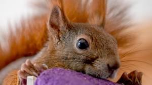 """Als""""Therapie-Begleittiere"""" kommen normalerweise Hunde oder Katzen in Frage - nicht aber Eichhörchen"""