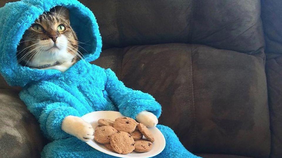 Katze im Krümelmonster-Kostüm mit Keksen