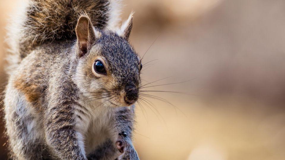 Ein Eichhörnchen sitzt auf einem Ast