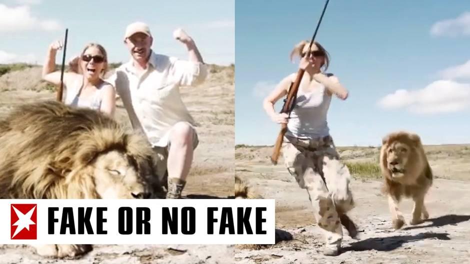 Paar posiert mit einem Löwen
