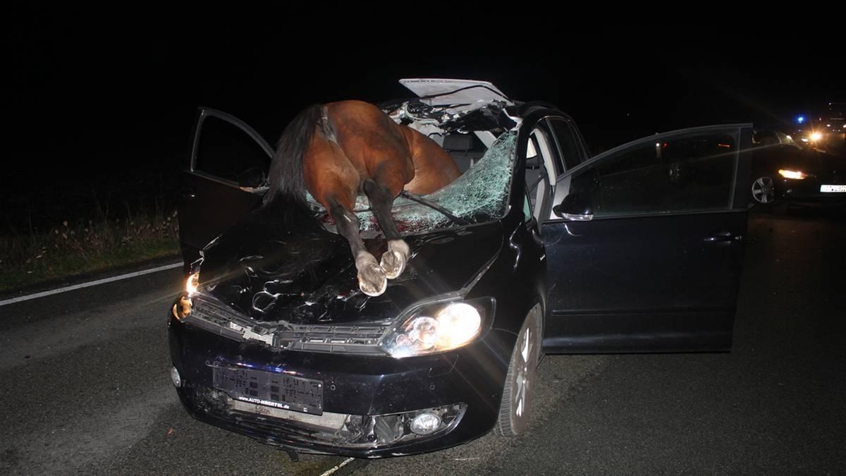 Versmold-Autofahrerin-bersieht-entgegenkommendes-Pferd-Tier-kracht-durch-Windschutzscheibe