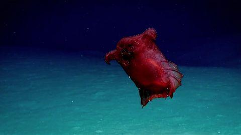 Golf von Mexiko: Tiefseebakterien vernichten Ölwolke