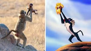 Affe hält sein Baby hoch wie in König der Löwen