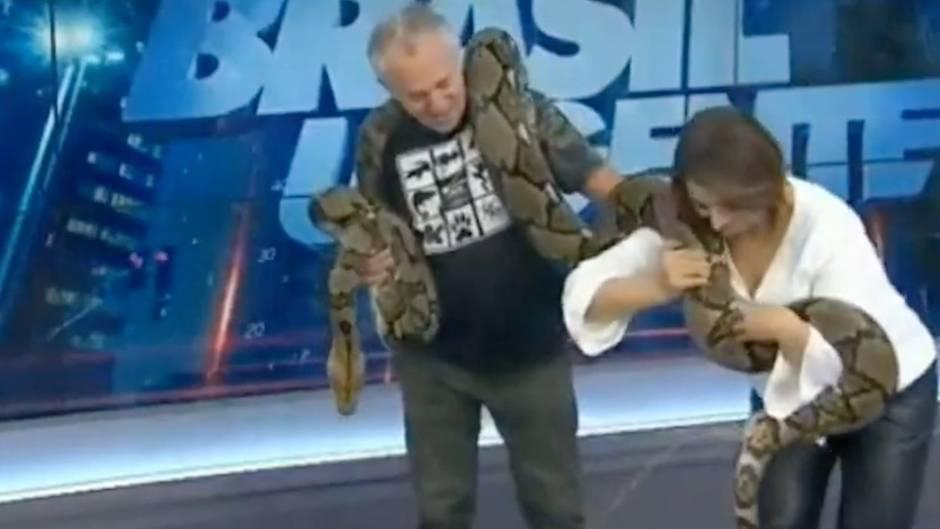Panne im Live-TV: Moderatorin referiert gerade über Schlangen, dann wird's unangenehm