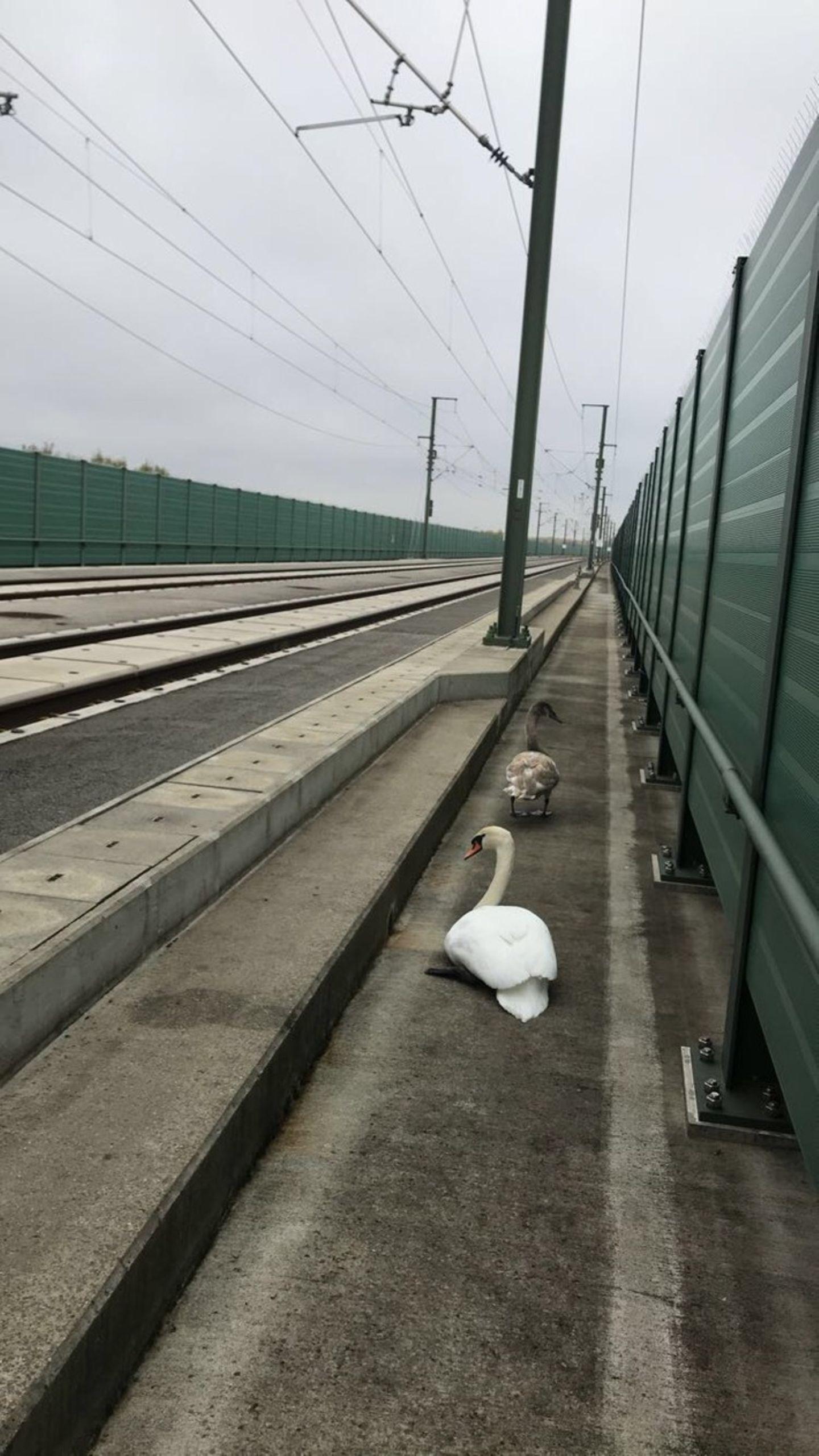 Kein Terrain für Schwäne: Die ICE-Schnellbahnstrecke zwischen Leipzig/Halle und Erfurt
