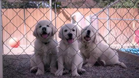 Netflix lässt die Hunde von der Leine in neuer Doku