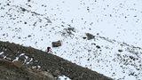 Auf einer Seitenmoräne des fast schon geschmolzenen GletschersVadrettin da Tschierva im Bernina-Gebiet.