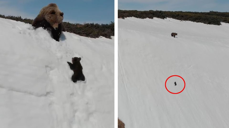 Oregon: Touristen füttern Bären und machen mit ihm Selfies – das Todesurteil für das Tier
