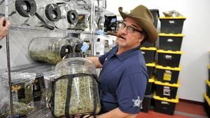 Filmschauspieler James Belushi betreibt eine Marihuana-Farm.