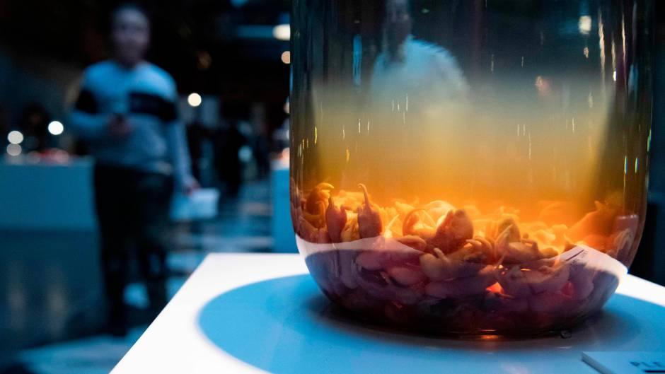 """Ekel-Alarm vorprogrammiert: Im """"Disgusting Food Museum"""" im schwedischen Malmö gibt es Maus-Wein."""
