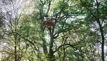 Anfang Oktober räumte die Polizei den Hambacher Forst - dann besetzten Demonstranten den Wald erneut. In lichter Höhe entstanden neue Plattformen.